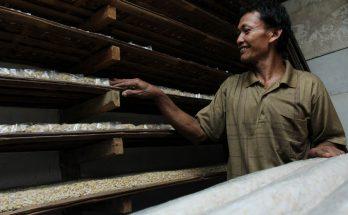 Pekerja pembuat tahu dan tempe di Pemukiman Industri Kecil (PIK) Primkopti Sentra Tahu dan Tempe Semanan, Kalideres, Jakarta Barat. (Foto-foto : Kuncoro Widyo Rumpoko)